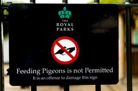 Don't feed the pigeons